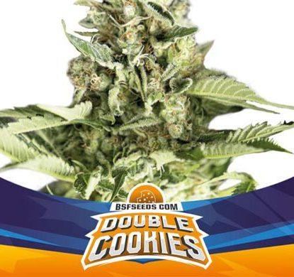 SensorySeeds Pianta Double Cookies Autofiorente