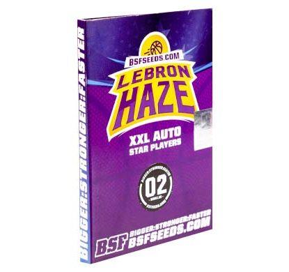 SensorySeeds Confezione Semi Lebron Haze Autofiorenti