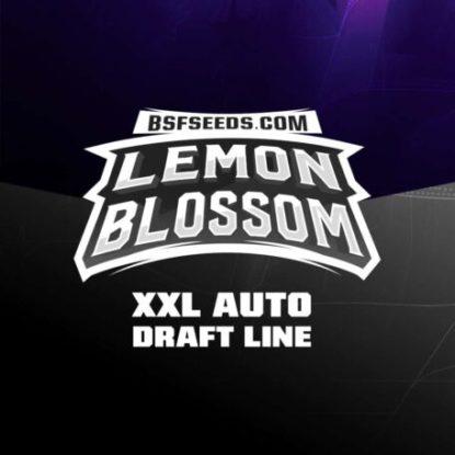 lemon-blossom-auto-logo