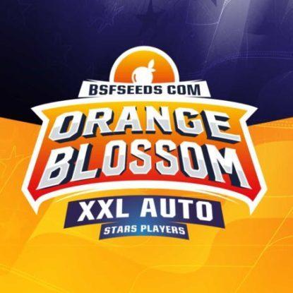Logo dei semi autofiorenti di Orange Blossom