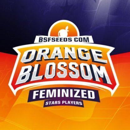 Logo dei semi femminizzati di Orange Blossom