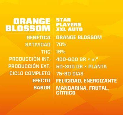 SensorySeeds Descrizione Semi Orange Blossom Autofiorenti