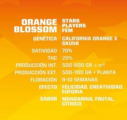 SensorySeeds Descrizione Semi Orange Blossom Femminizzati