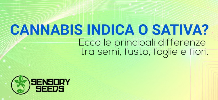 Cannabis indica semi differenza sativa