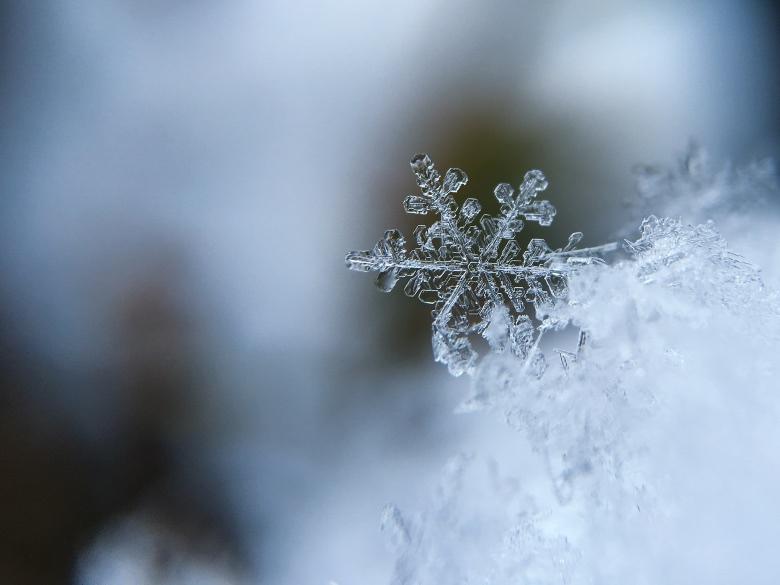 semi da collezione autofiorenti invernali