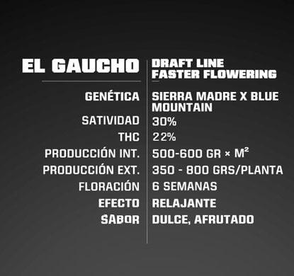 Caratteristiche dei semi fast flowering El Gaucho