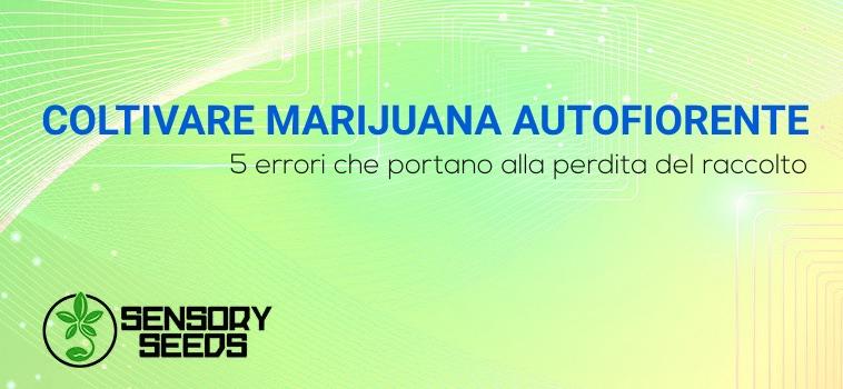 coltivare marijuana autofiorente errori