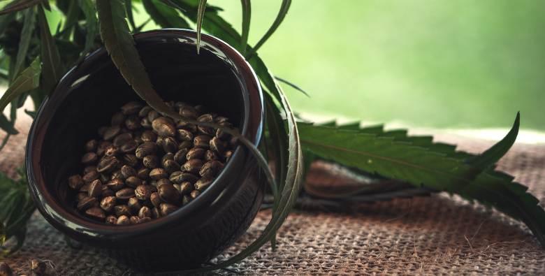 comprare semi femminizzati online