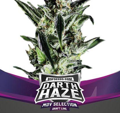Semi di Marijuana femminizzati Darth Haze