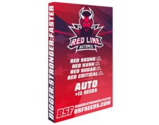 Red Line Automix kit di semi di cannabis