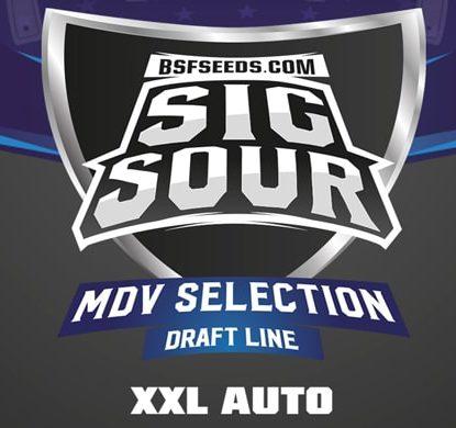 Logo dei semi autofiorenti Sig Sour XXL