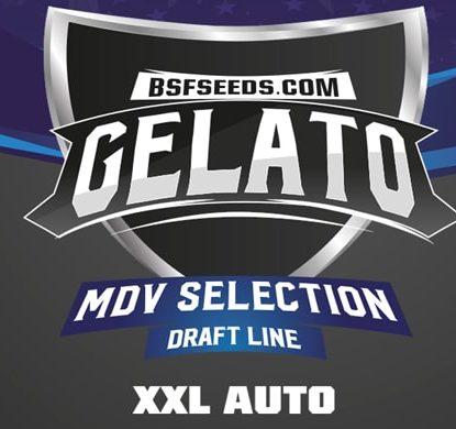 Logo Sensory Seeds di semi di cannabis di Gealto XXL