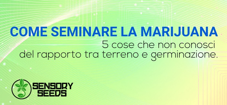 Come seminare marijuana