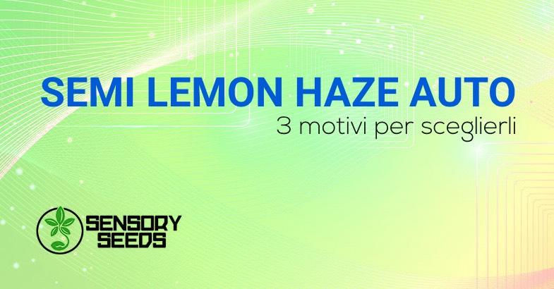 Lemon Haze semi di cannabis