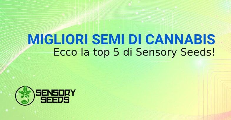 MIGLIORI SEMI DI CANNABIS SENSORY SEEDS bsf