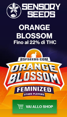 Banner Sensoryseeds Orange Blossom semi di cannabis femminizzati
