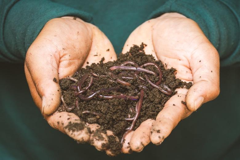 fertilizzanti organici per semi marijuana