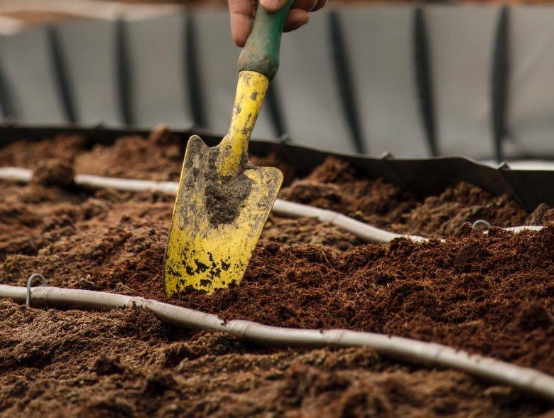 miglior terreno per coltivare cannabis
