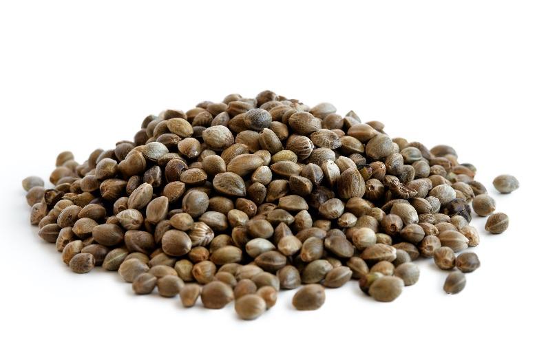 migliori semi femminizzati online BSF Seeds