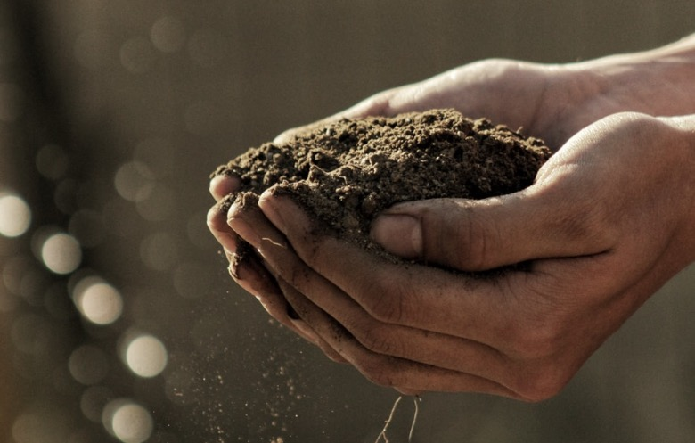 quali sono i semi che non germogliano