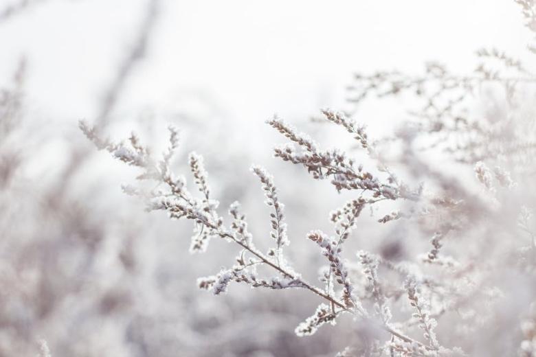 semi di cannabis autofiorenti invernali