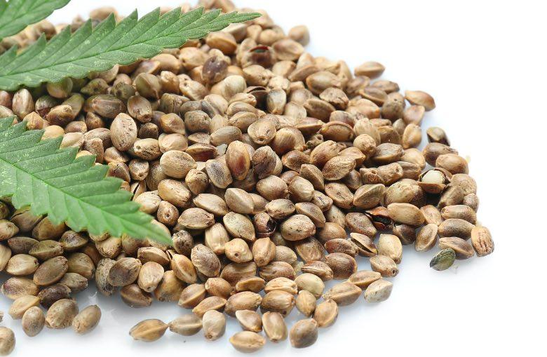 semi di cannabis online femminizzati