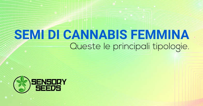Semi di cannabis femmina