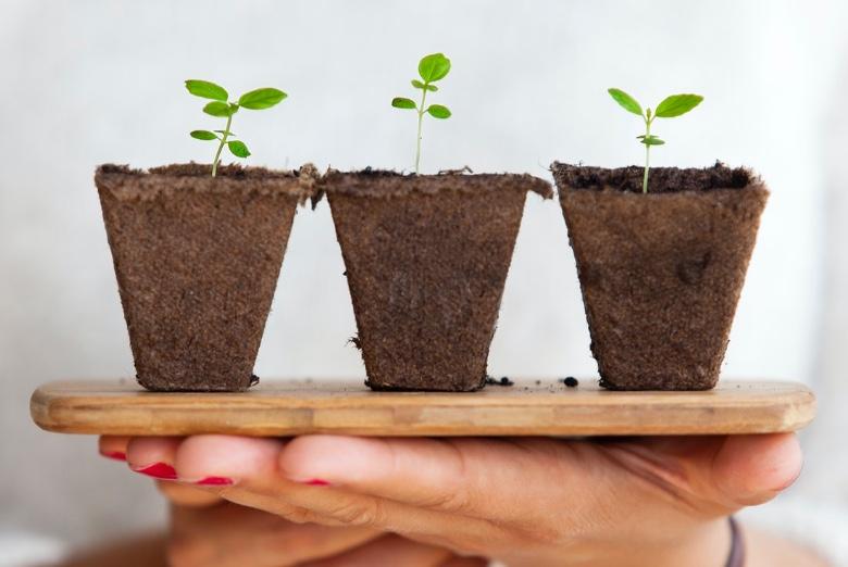 coltivare semi di canapa Outdoor o indoor