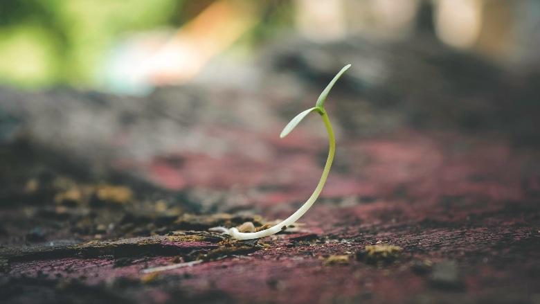 coltivazione semi autofiorenti outdoor veloci