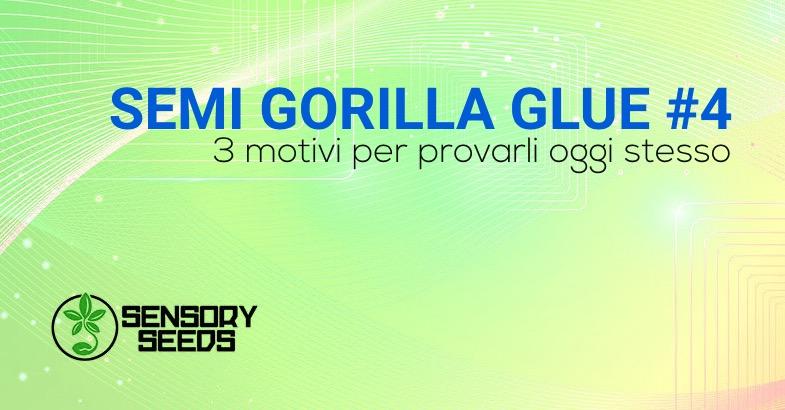gorilla semi di cannabis