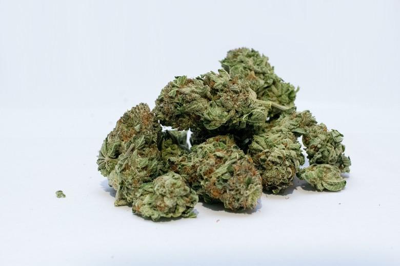resa semi di cannabis autofiorenti indoor