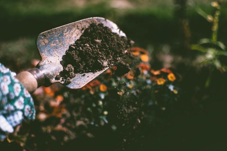 terriccio per germinazione semi autofiorenti