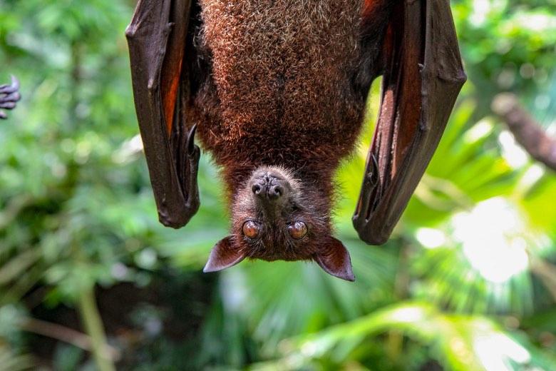 guano di pipistrello cos'è