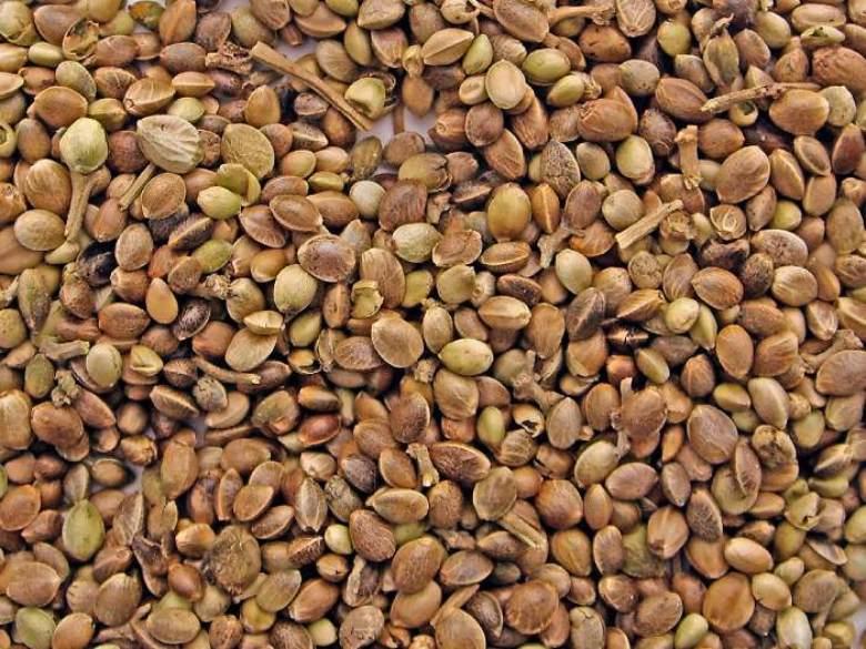 semi di cannabis da collezione