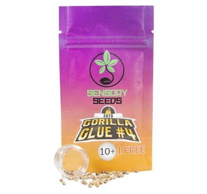 Confezione di semi di cannabis sfusi autofiorenti di Gorilla Glue 4