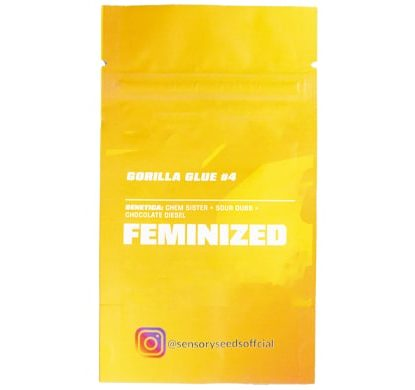 Descrizione di semi femminizzati di marijuana sfusi di Gorilla Glue 4