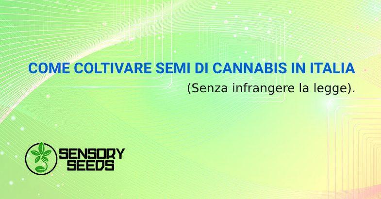 Come coltivare semi di cannabis in Italia