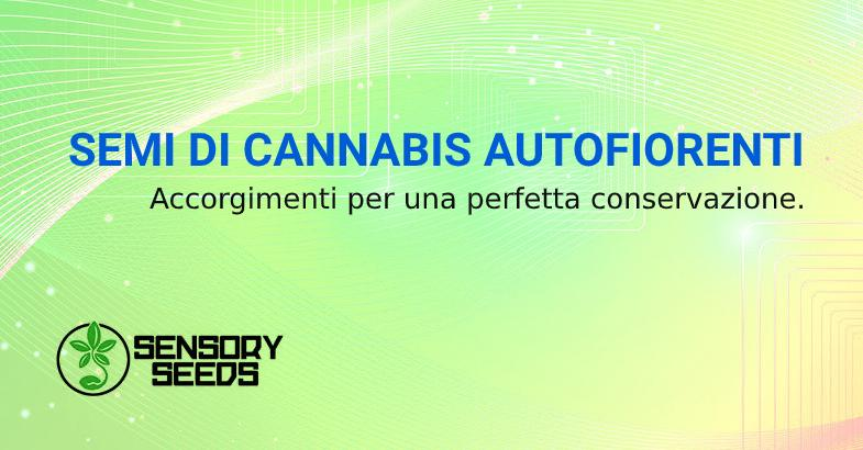 Semi di cannabis autofiorenti conservazione corretta
