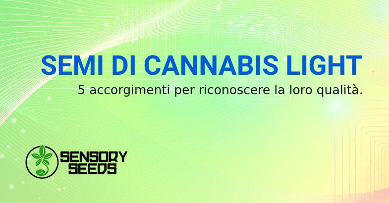 identificare Semi di cannabis light di qualità