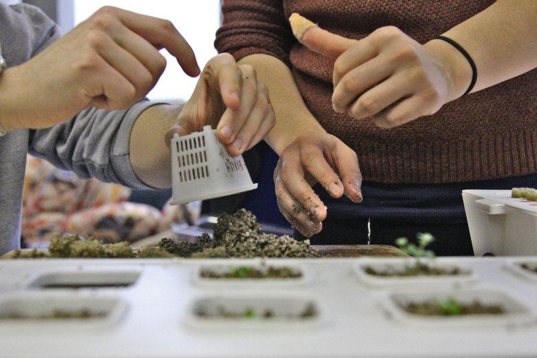 serra idroponica e semi di cannabis