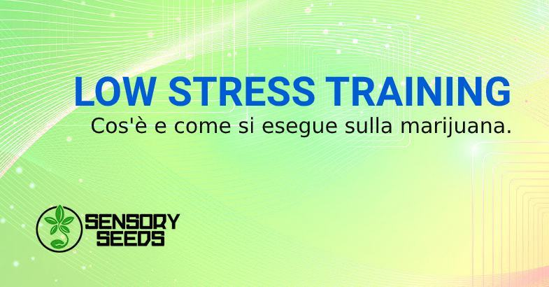 low stress training e semi di marijuana