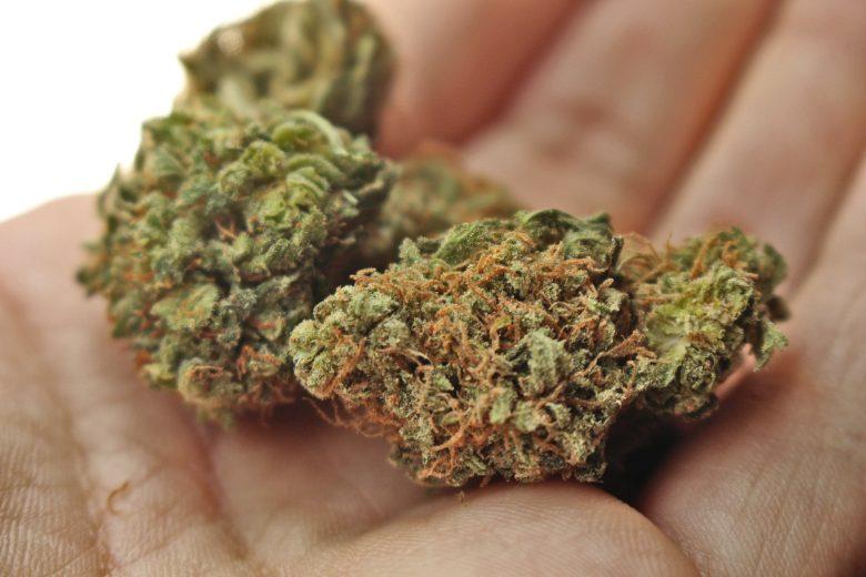 migliori tipi di cannabis e semi di marijuana