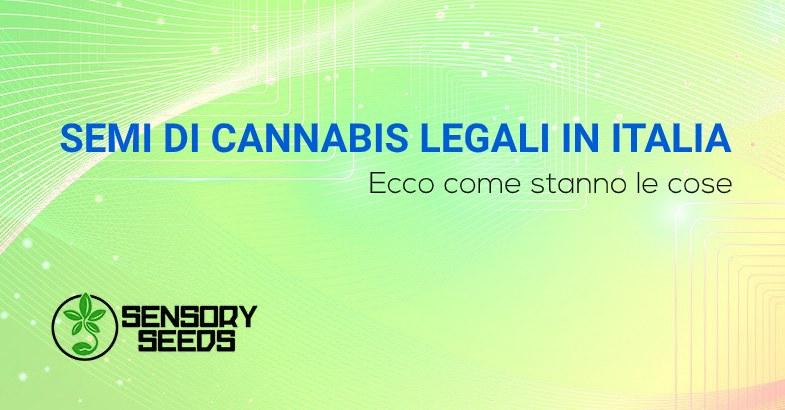 SEMI DI CANNABIS LEGALI IN ITALIA