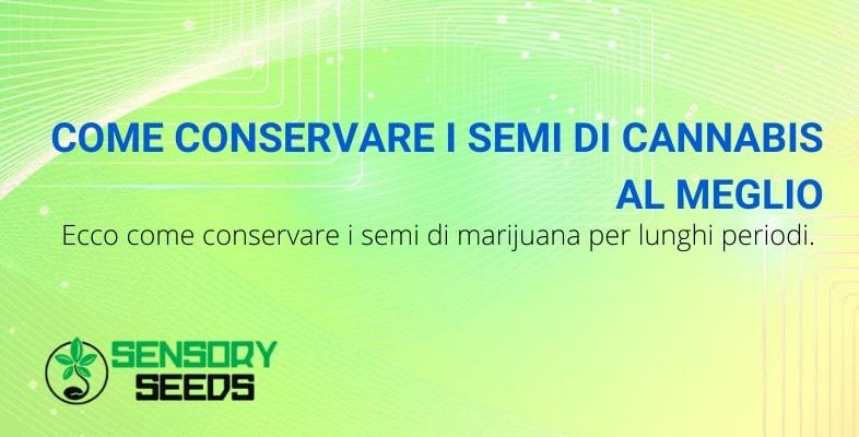 Semi di marijuana: conservazione