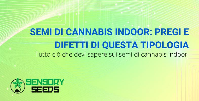 semi di cannabis indoor