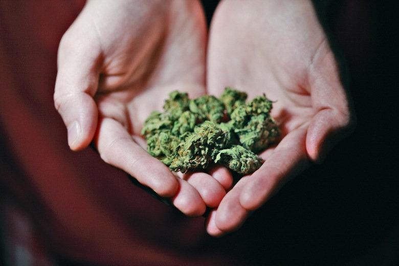 boccioli con semi di cannabis tra le mani