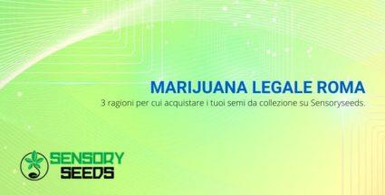 Marijuana legale Roma: 3 ragioni per cui acquistare i tuoi semi da collezione su Sensoryseeds.