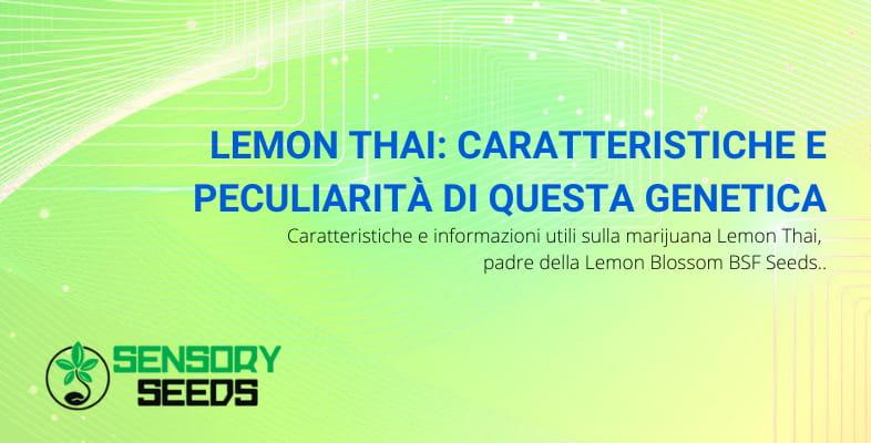 Lemon Thai marijuana caratteristiche