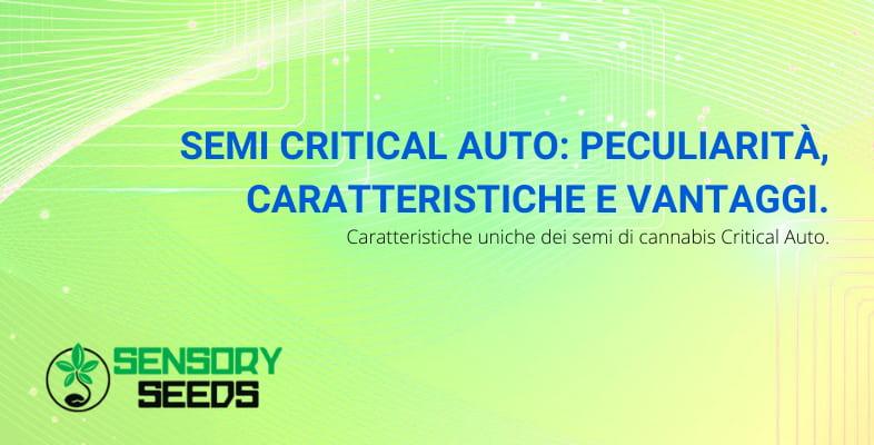 critical auto caratteristiche