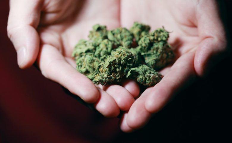 fiori di cannabis amnesia haze